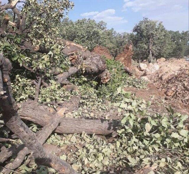 عامل قطع درختان جنگلی روانه زندان شد