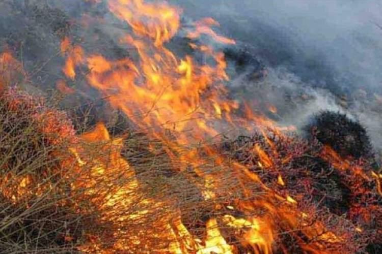 شرح حال آتش افتاده بر دامن زاگرس