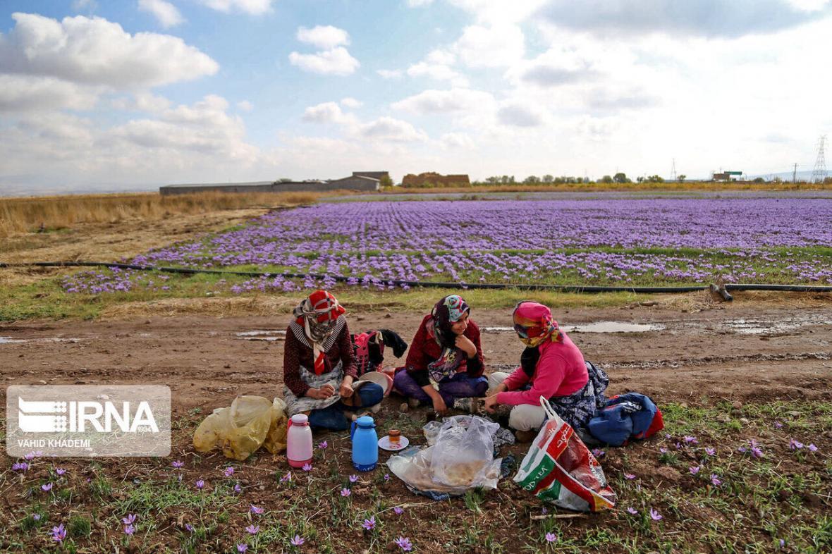 خبرنگاران شیروان بیشترین بیمه شدگان روستایی زن را در خراسان شمالی دارد