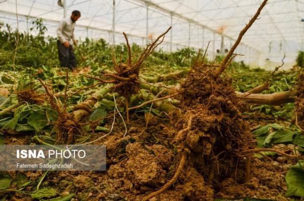 لطمه کرونا به صنعت کشاورزی