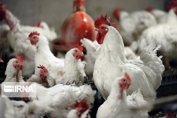 خبرنگاران بیماری آنفلوانزای پرندگان در واحدهای صنعتی کنترل شد