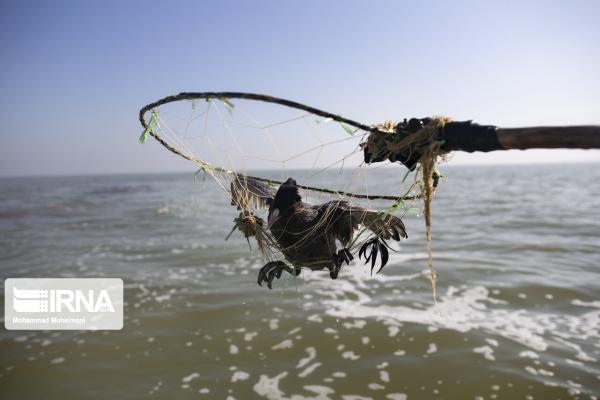 خبرنگاران تغییری در مرگ ومیر پرندگان در تالاب میانکاله مشاهده نمی گردد