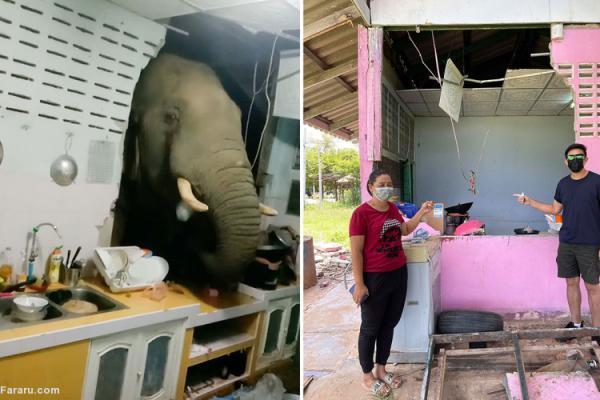 (ویدئو) وقتی فیل به آشپزخانه سرک می کشد!
