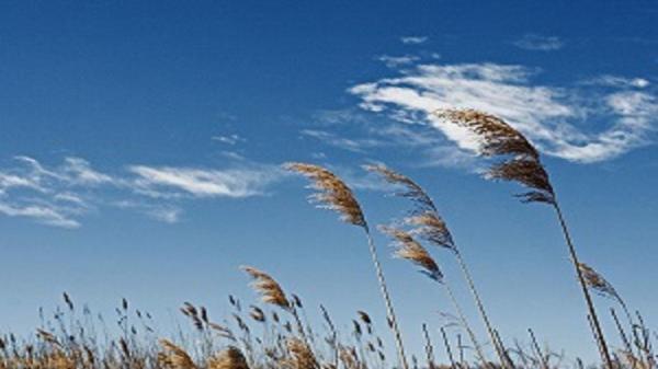 وزش باد شدید در کردستان